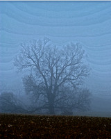 art tree fog